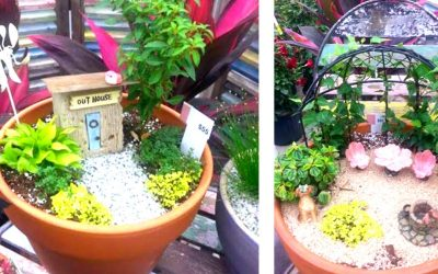 Fairy Garden Plants and Planters